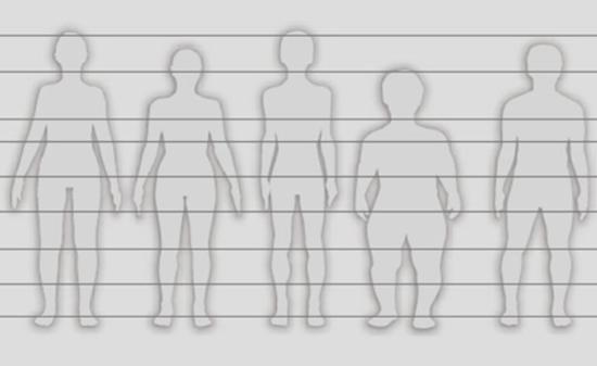 Bild Körpertypen